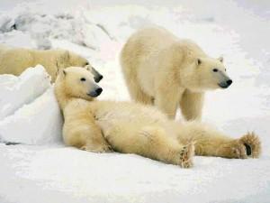 ours en train de se prélasser