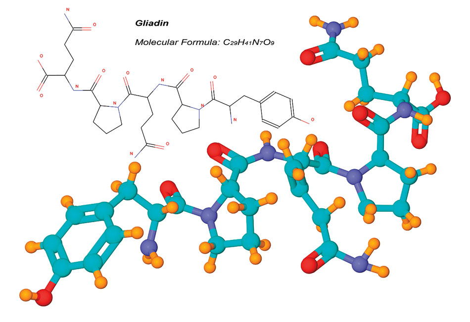 La gliadine est un composant du gluten
